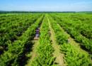 Információszerzés és döntéstámogatás az agráriumban - töltse ki a kérdőívet