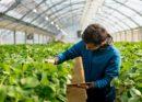 Óvatosan optimisták a magyar agrárvállalkozók